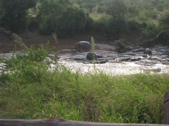 Neptune Mara Rianta Luxury Camp: view of hippos from our balcony