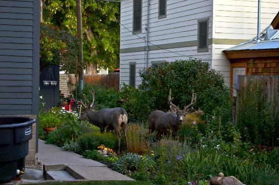 Gable House Bed and Breakfast : Breakfast guests at the Gable!