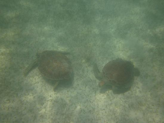Tulum Bazaar: Turtles