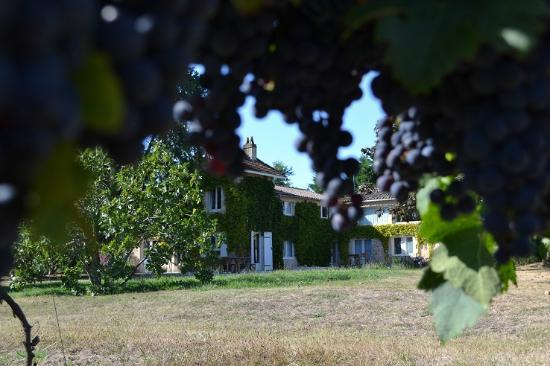 L'Autre Vie: A blend of boutique hotel & B&B charm, surrounded by Bordeaux's vineyards: The beautiful B&B