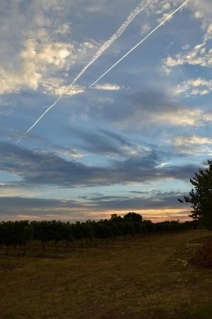 L'Autre Vie: Overlooking the vines at sunset