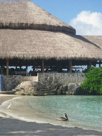 Presidente Inter-Continental Cozumel Resort & Spa : View from beach, restaurant