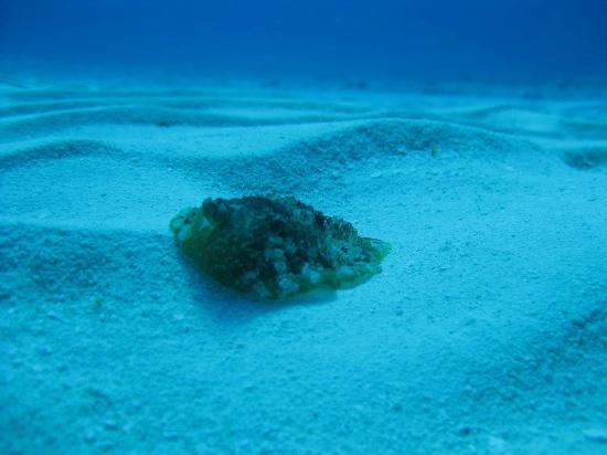 Presidente Inter-Continental Cozumel Resort & Spa: ScubaDu sea slug