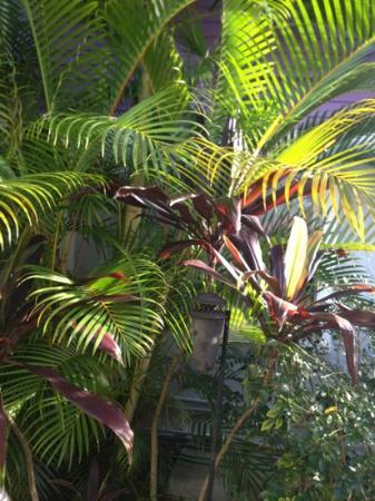 Casa Grandview West Palm Beach: Paradise