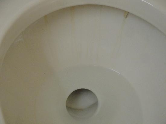 Hampton Inn White River Junction: dirty toilet