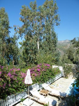 Beyaz Yunus: Pool Suite garden