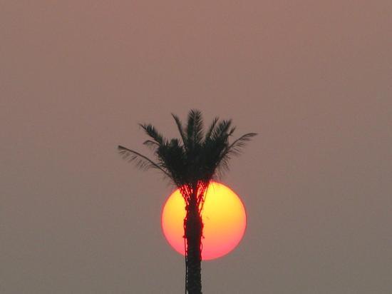 Plage et parc de Jumeira : En période chaude, même la nuit l'air reste à plus 35°...