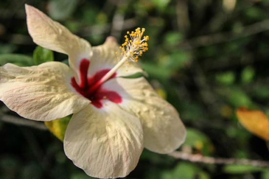 Atlantida Lodge: Hibiscus