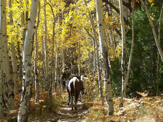 Cub Lake Trail: horses being led because of steep trail