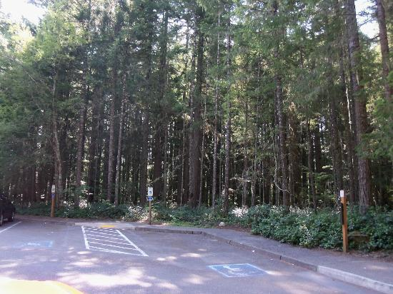 La Quinta Inn & Suites Olympia - Lacey : Just outside the hotel