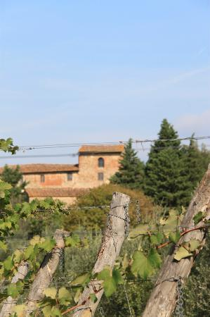Tuscan Wine Tours by Grape Tours: looking out on the vineyard... i believe Machiavelli's actual home