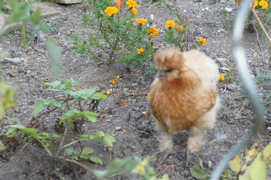 La Maison de l'Argentier du Roy: Chicken