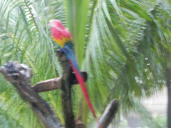 Paradise Beach: Live parrots