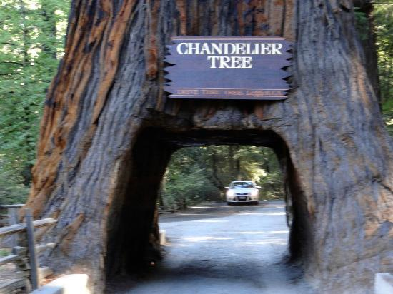 Chandelier Drive-Through Tree: Chandelier Tree