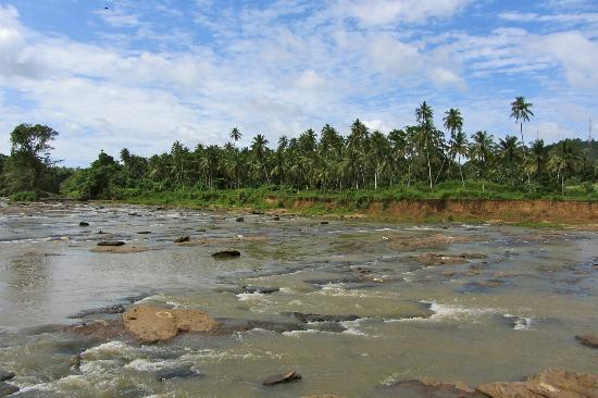Pinnawala Elephant Orphanage: beautiful scenic stream