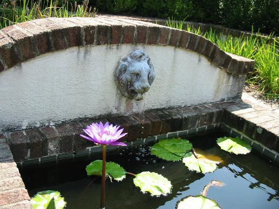 Reynolda House Museum of American Art: Pond