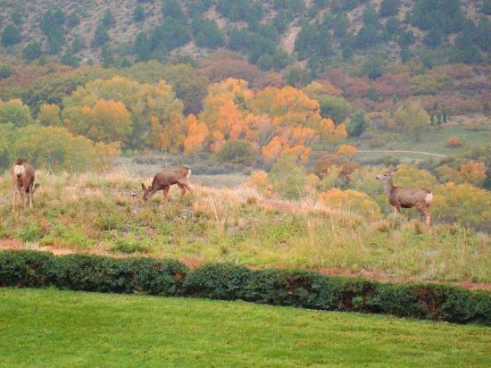 Garden of the Gods Club and Resort: Neighbors!
