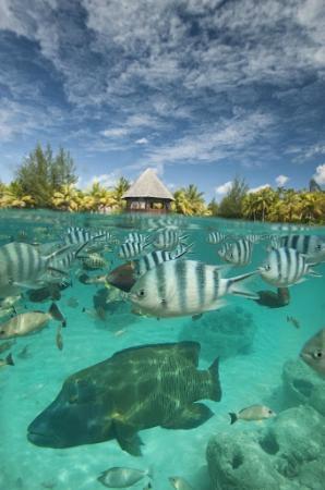 The St. Regis Bora Bora Resort : Lagoonarium