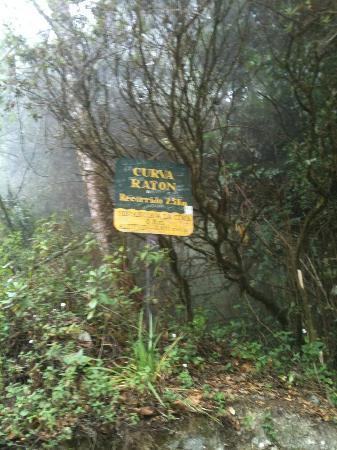 Volcan Baru National Park: It was starting to get foggy at this point but the weather was perfect and it never rained