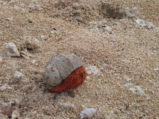 Nanihi Paradise: Begegnung am Strand 