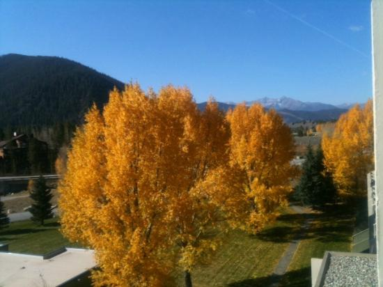 Keystone Lodge & Spa: Beautiful Aspen trees