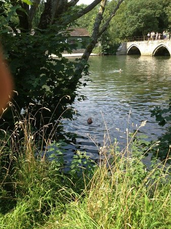 Durley, UK: Bradford on avon swimming hole