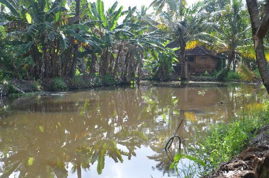 Nelpura Heritage Homestay: Fish pond