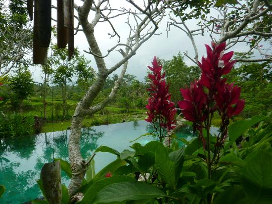 Villa Sebali : View from outdoor area towards rice paddies