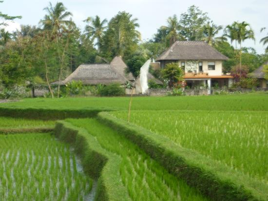 Villa Sebali : Villa view from rice paddies