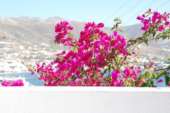 أكروتيري هوتل: Blick vom Balkon 
