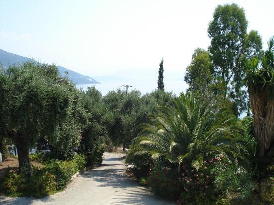 Nautilus Hotel : hotel garden