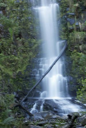Lorne Coachman Inn: Erskine Falls, just up the road