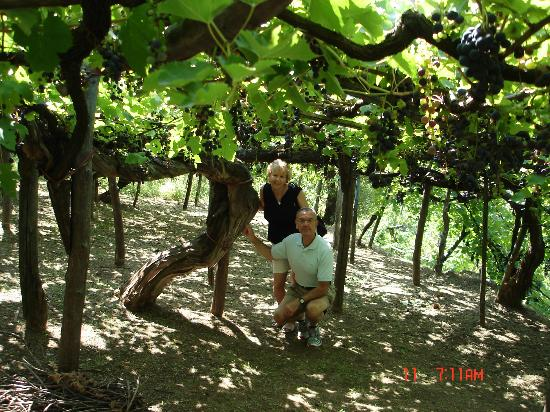 Day Tour in Italy : vineyard