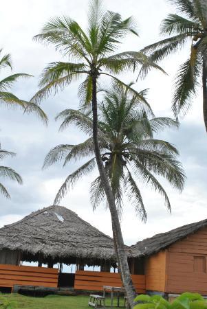 Dolphin Lodge Uaguinega: el ambiente