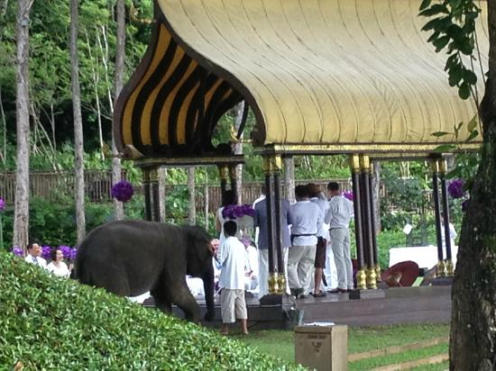 Phulay Bay, A Ritz-Carlton Reserve: Wedding with two baby elephants with their trunks up... for good luck!
