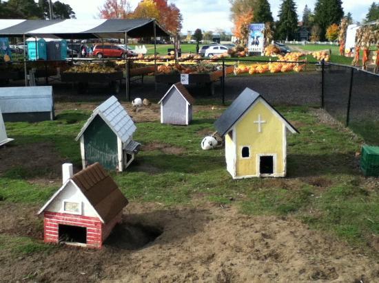 Barrie, Kanada: Tiny Houses