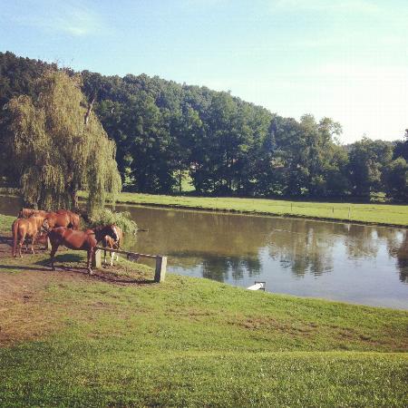 سبرينجماد مونتان: View from the Horse barn 