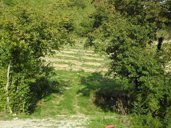 Agriturismo Il Capannino: Il Capannino