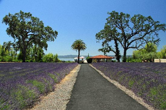 Ceago Estate Wines: looking toward boat dock