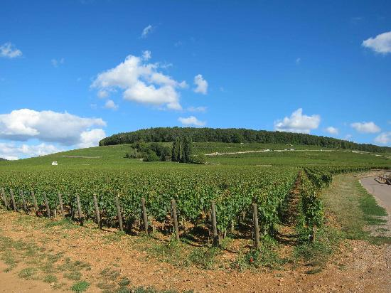 Table Comte Senard : Corton Hill behind Aloxe-Corton