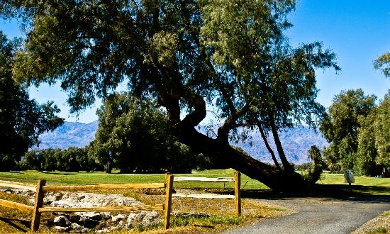 The Inn at Death Valley: Furnace Creek Ranch Golf Course