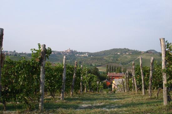Agriturismo La Mussia: Im Weingarten von La Mussia