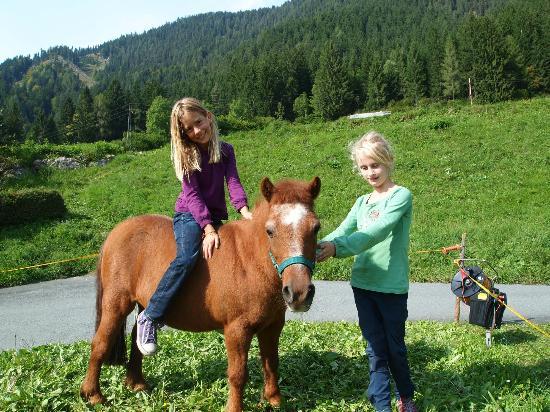 Ferienhof Obergasser & Pension Bergblick: Pony Gitti freut sich auf einen Ausritt