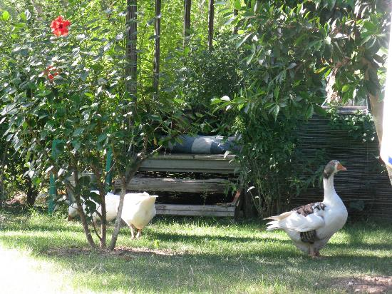 Keyif Pension : в саду