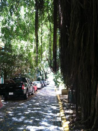 Caleta 64 Apartment: Tree-lined street in front of hotel