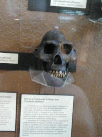 Musee Redpath: skull