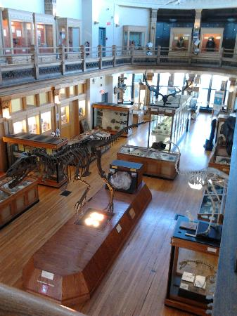 Musee Redpath: redpath