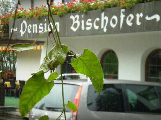 Pension Bischofer: Partie d'une vue ext....