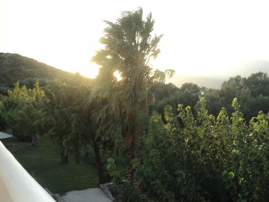 Irida Studios: sunset over the olive groves