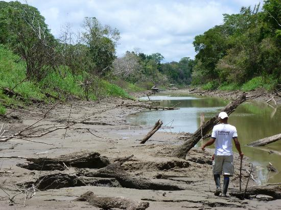 Amazon Yarapa River Lodge: Low water season - river banks preferred by butterflies!